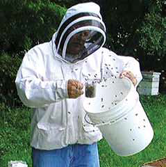 august southern oregon beekeepers association