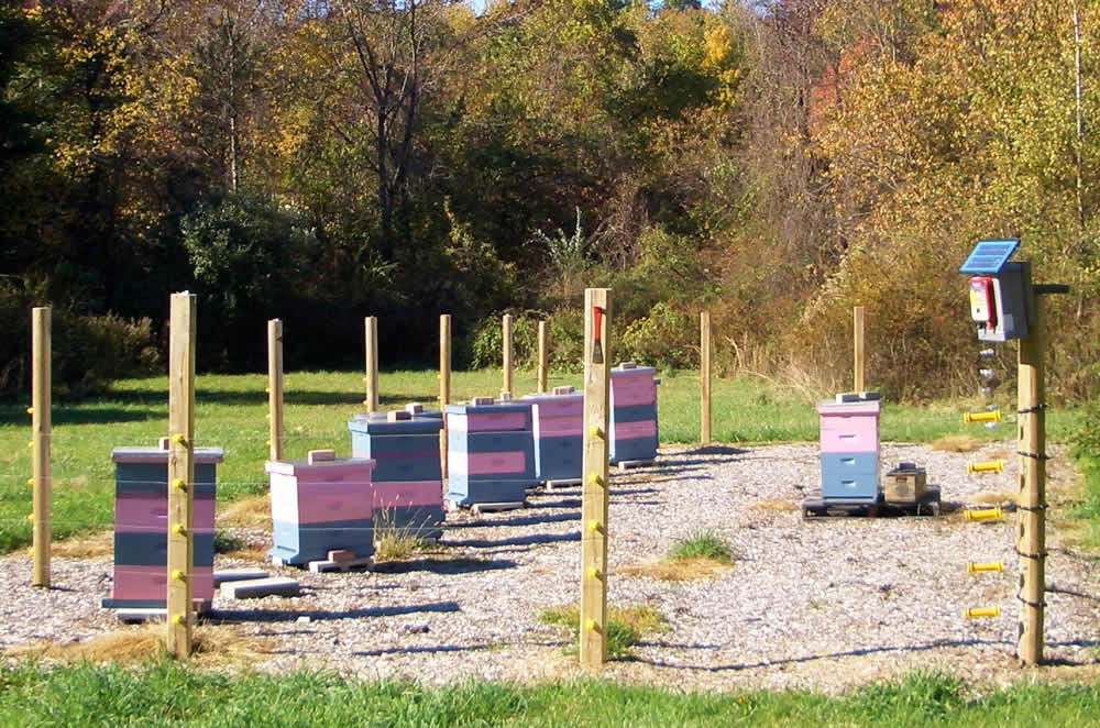 Protect Your Bees From Bears Southern Oregon Beekeepers
